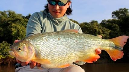 Pescaria de Piracanjuba com milho na Argentina
