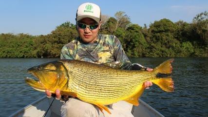 Dourados do rio Manso