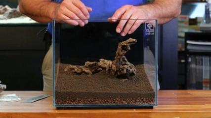 Como usar substratos para aquários plantados