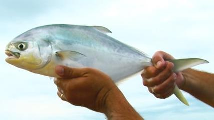 Arranque e sua funcionalidade na pesca de praia