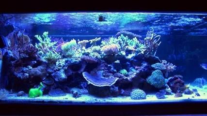 Os cuidados com o aquário marinho de coral - parte 2