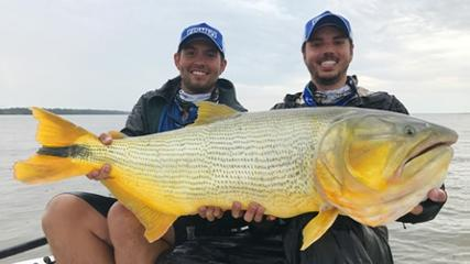 Pescando dourados argentinos no corrico
