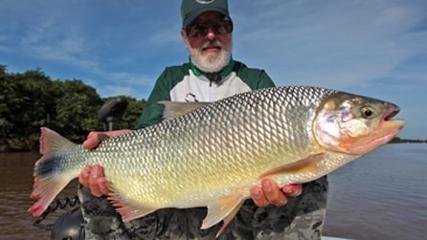 Fly fishing para fisgar piracanjuba no rio Paraná