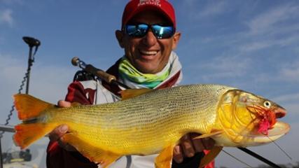 Os grandes dourados do rio Paraná