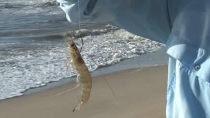 Pescaria de robalo com isca viva