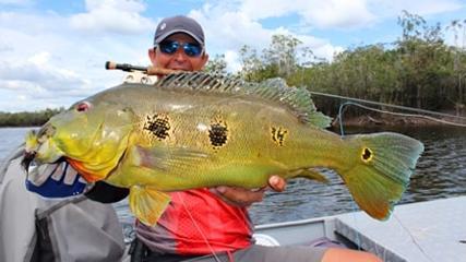 Os grandes tucunarés do rio Xeruini