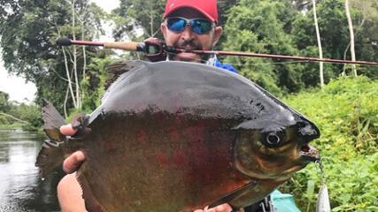 Peixes diversos no rio Teles Pires, Mato Grosso