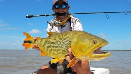 A desafiante pesca de dourado na Argentina