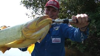 Dourado do Pantanal