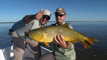 Saltos de dourado em pescaria apaixonante