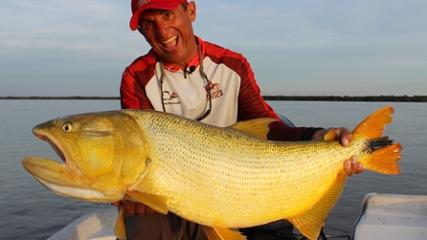 Os grandes dourados nas águas do rio Paraná
