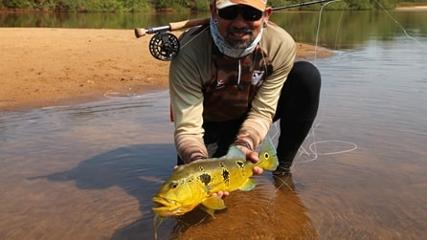 Fly Fishing selvagem nas praias do rio Tapajós