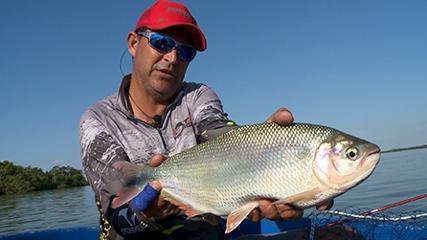 Variada pescaria no rio Paraná