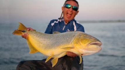 Dourados gigantes do rio Paraná