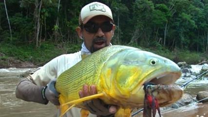Dourados no centro da Amazônia boliviana