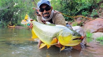 Os gigantes Dourados do Rio Manso