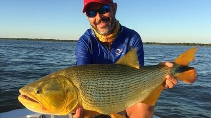 Dourado e pintado na Argentina