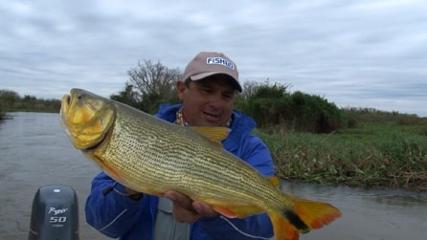 Pesca de dourado com isca viva em Goya