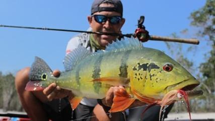 Pescaria difícil de tucunaré-açu no seco rio Itapará
