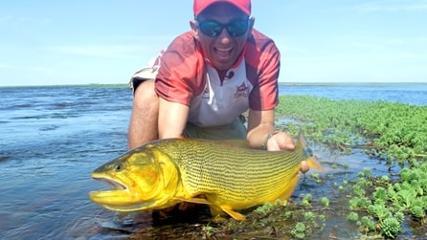 Pescaria de dourado com fly fishing em Esteros Del Ibera