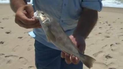 Pescaria de pampo e betara com isca natural