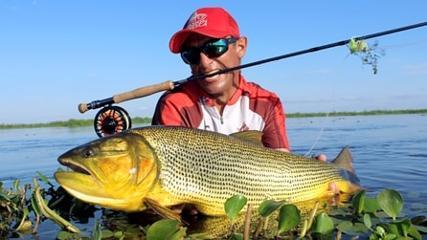Belíssimos dourados em Esteros del Iberá no fly fishing