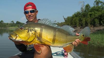 Pescando tucunarés no rio Juma