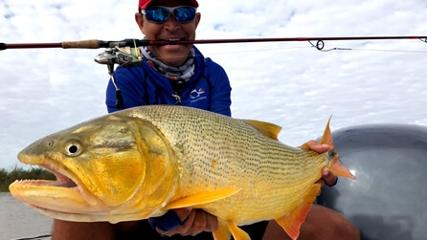 Dourados e traíras no rio Paraná