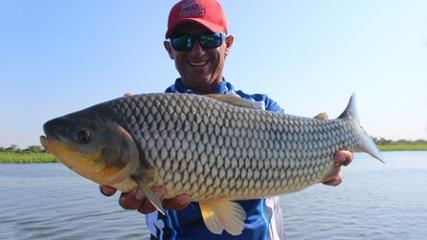 Pescaria variada de peixes de escama no Brasil