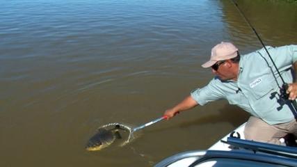 Em Corrientes, diferentes espécies na isca natural