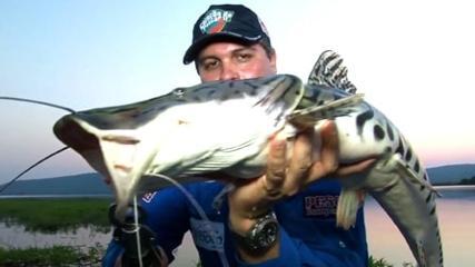 A onça-pintada e os peixes do pantanal
