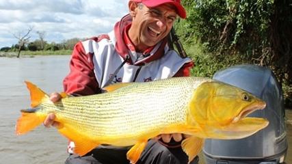 Com isca natural, pescaria de dourado no rio Paraná
