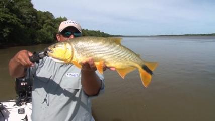 Tuvira para dourado em Corrientes