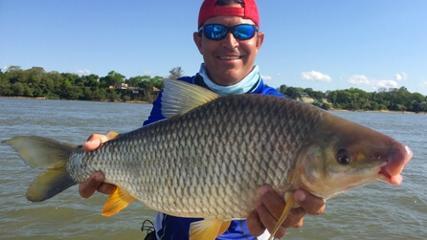 Gigantes piaparas argentinas do rio Paraná