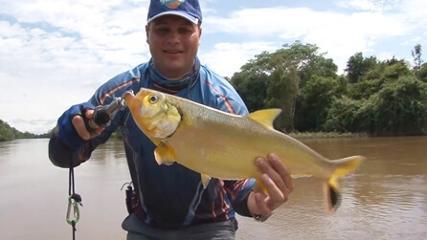 Os barbados e as douradas do rio Araguaia