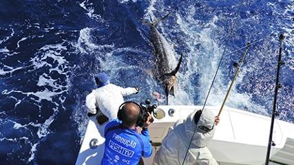 Pesca de marlins-azuis em equipe