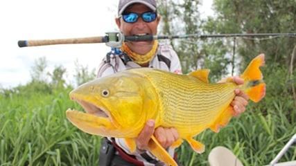 Dourado na rodada com isca natural no Pantanal argentino