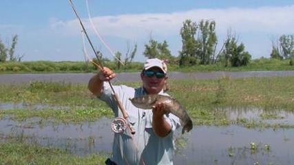 Traíra na pesca com mosca