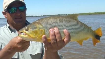 Pescaria variada de fly fishing na Argentina