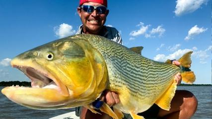 Grandes dourados do rio Paraná