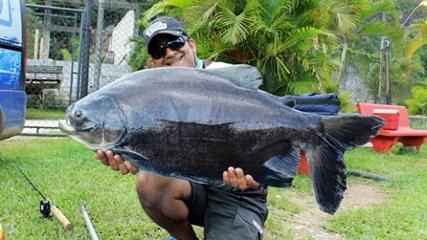 A espetacular e curiosa pescaria no Horto de São Vicente