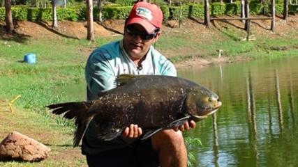 Pescaria em tanque de engorda