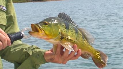 Torneio de Pesca de Três Lagoas