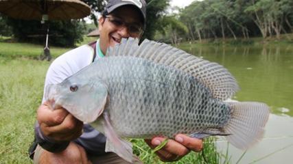 Diversidade de peixes no Pesqueiro Ueda