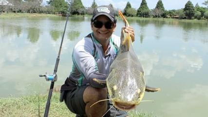 Isca natural para as pirararas e dourados do Fishing Park