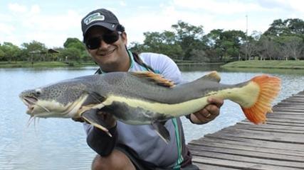 Pirarara com isca natural e dourado no fly de caiaque