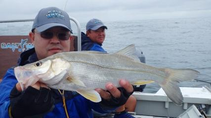Saltwater - Pescaria de robalos com jig head