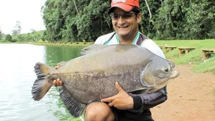 Com pão e ração, tambas monstros no pesqueiro Arujá