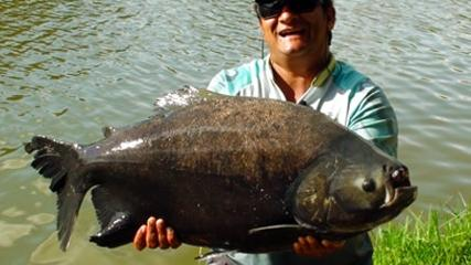 Pesque e Pague - No Sol Pescaria Denis Garbo encontra os bitelos