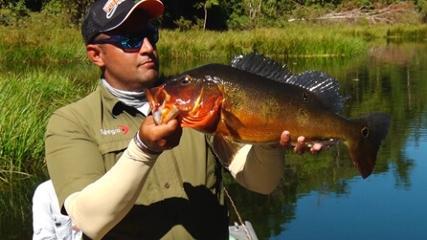 Tucunaré-fogo na reserva de pesca esportiva do rio Azul